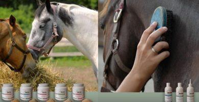 Pferde mit Equipergato® Produkten für Fütterung und Pflege