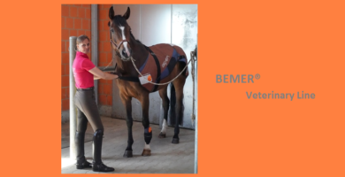 Bemer® Veterinary Line