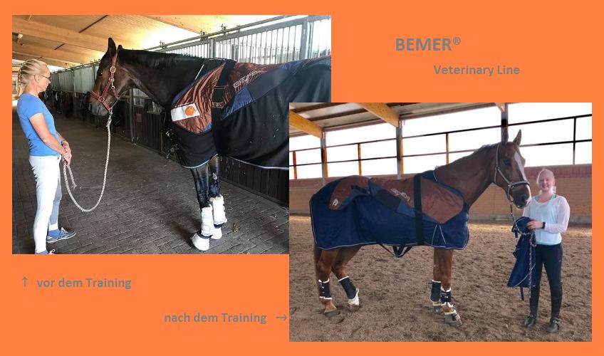 Bemer® Veterinary Line im Einsatz bei Reitsport SPC