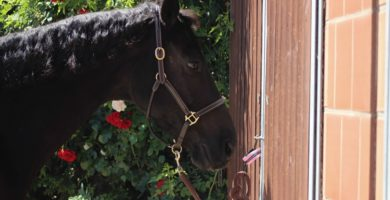 Panikschlaufe mit Pferd