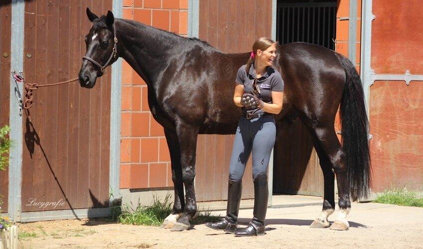 EquiCrown ® Massagestriegel für das Wohlbefinden des Pferdes