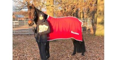 SALVANA Winter Edition - Pferdeleckerli mit Lebkuchengeschmack