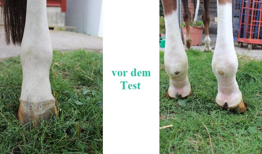 Violettas Problem mit der linken Hinterhand vor dem Test