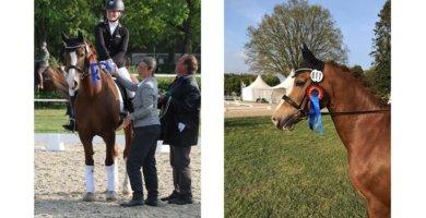 Championat des Freizeitpferdes 2019 in Verden
