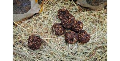 Pferde Leckerbissen Stud Muffins