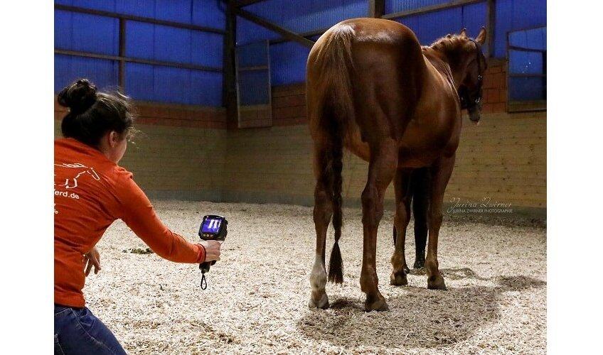 Pferdethermografie ist non-invasiv