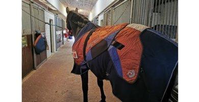 BEMER für Pferde