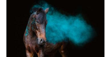 Jurina Zwirner Fotografin