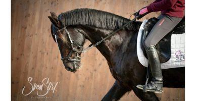 Light Hand ® für Reiterhände