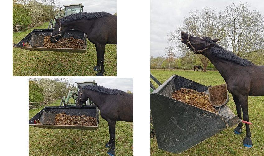 Weidemanagement für Pferde