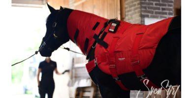 EQUUSIR BIOS Magnetfelddecke für Pferde