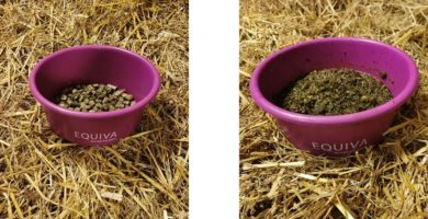 Equiva Goldhorse Heucobs für Pferde