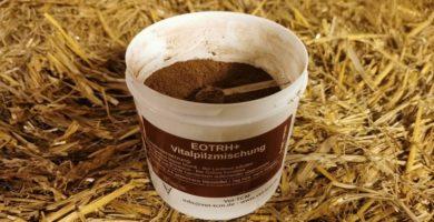 EOTRH+ Pferd gegen Parodontitis