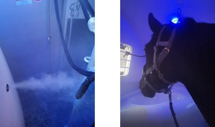 Sole-Dampfkiste für Pferde
