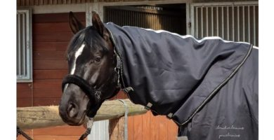 Equine Microtec ® ONE Abschwitzdecke