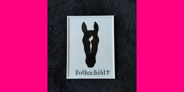 Dein Pferd im Fokus mit your.pet.in.black